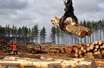 Logging-and-Heavy-Equipments-Industry-Service